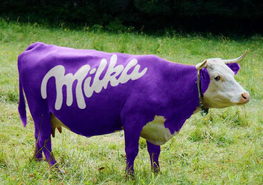 Фиолетовая корова в контенте